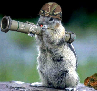 squirrelbazooka