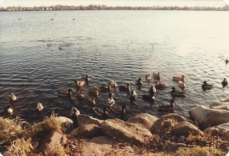 Paul Knows Ducks